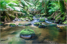 Matteo Colombo - River in the green rainforest of Tasmania, Australia