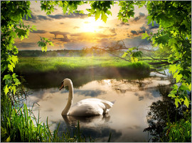 Romantic swan pond