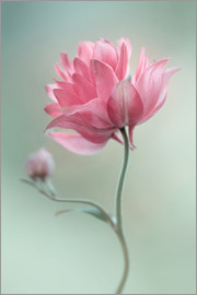 Mandy Disher - Pink blush