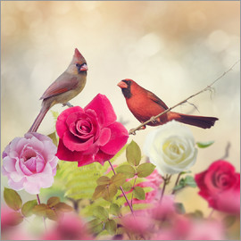 Roses and cardinals