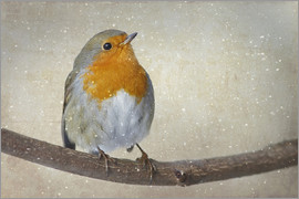 WildlifePhotography - robin Art