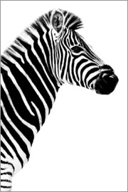 Philippe HUGONNARD - Safari Profile Collection - Zebra White Edition III