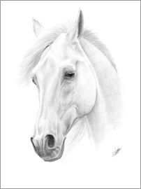 Christian Klute - Horse drawing