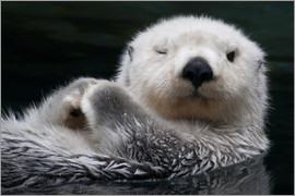 Mark Newman - Sleepy Sea Otter