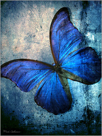 Mark Ashkenazi - butterfly