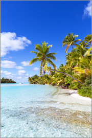 Matteo Colombo - Beautiful tropical beach with palms, One Foot Island, Cook Islands, Pacific