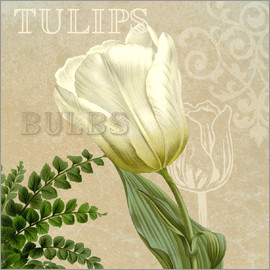 Gail Fraser - Best of tulips review