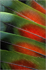 Darrell Gulin - Love bird tail feathers