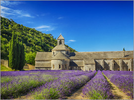 Terry Eggers - Seananque Monastery with lavender field, Provence