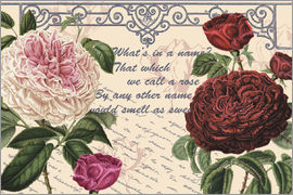 Gail Fraser - Shakespeare Quote Rose