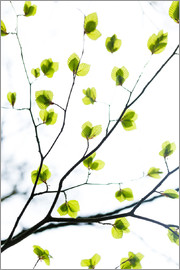 Mareike Böhmer Photography - Signs of Spring