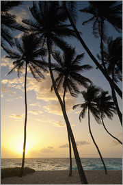 Ian Cuming - Silhouette of palm trees at dawn