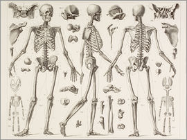 Ken Welsh - Skeleton Of A Fully Grown Human