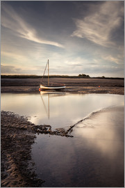 Matthew Cattell - Snow Goose on the shoreline at Burnham Overy Staithe in Norfolk, England, United Kingdom, Europe