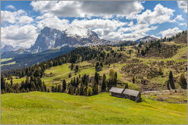 Christian Müringer - Summer on the Alpe di Siusi (South Tyrol, Italy)