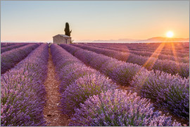 age fotostock - Sunrise over lavender field