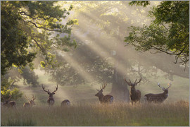 Stuart Black - Deer in morning mist
