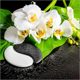 Spa arrangement with white orchid