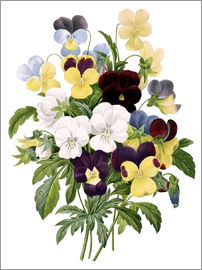 Pierre Joseph Redouté - Bouquet of Pansies