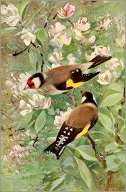 Wilhelm Kuhnert - Goldfinch
