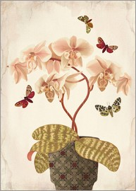 Mandy Reinmuth - Orchid Portrait