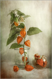 Mandy Disher - Still life with Physalis