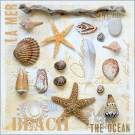 Andrea Haase - Beach Treasures II