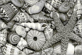 Andrea Haase Foto - Beach Treasures