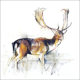 Mark Adlington - Study of a Stag