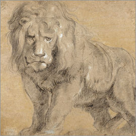 Peter Paul Rubens - Study of a lion