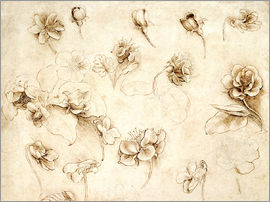 Leonardo da Vinci - Study of Flowers of Grass-like plants