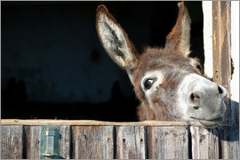 Cute curious donkey
