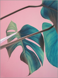 Emanuela Carratoni - Sweet pink monstera leaves