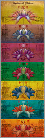 Sharma Satyakam - System of Chakras Contrastive View Yoga Poster