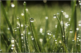 Jeremy Walker - Dew drops on grass
