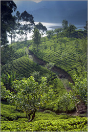 Paul Kennedy - Tea plantation and lake, Sri Lanka
