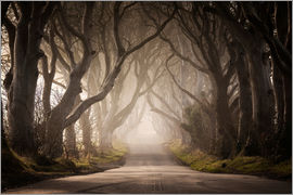 Carsten Meyerdierks - The Dark Hedges
