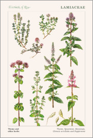 Elizabeth Rice - Thyme and other herbs