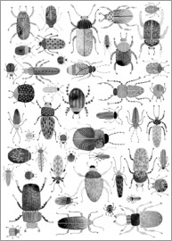 Nic Squirrell - Ink Beetles