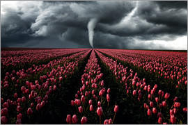 Oliver Henze - Tornado and tulip field