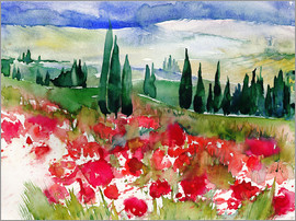 Jitka Krause - Tuscan Poppies