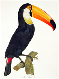 Jacques Barraband - Toucan No.2