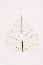 Kelly Redinger - Transparent Leaf
