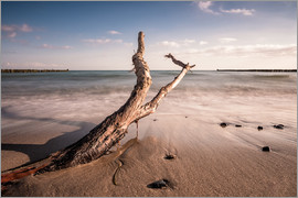 Rico Ködder - Drift wood on shore of the Baltic Sea
