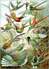 Trochilidae hummingbirds