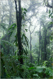 Matteo Colombo - Tropical rainforest with fog, Monteverde cloud forest, Costa Rica