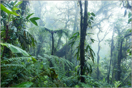 Matteo Colombo - Tropical Rainforest with fog, Monteverde Cloud Forest Reserve, Costa Rica
