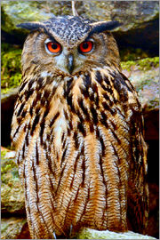 GUGIGEI - northern eagle owl