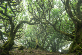 Andreas Wonisch - Ancient Fairy-Tale Forest on Madeira