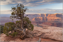 Cathy & Gordon Illg - USA, Utah, Dead Horse Point State Park. Sunrise on juniper and canyon.